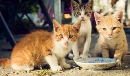 Kedilere Göre Mahalle