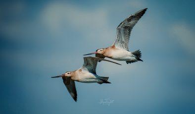 Göçmen Kuşları Yolculayalım